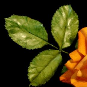 Molde de Silicone Frisador/Marcador de nervuras da Folha da Rosa, 2 PEÇAS, 1 CONJUNTO DUPLA FACE