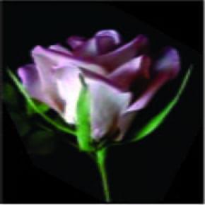 Ejetor e Cortador de Sépala de Rosa 3 peças