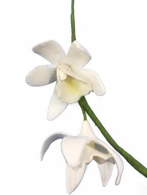 Mini Orquídea Cymbidium de biscuit