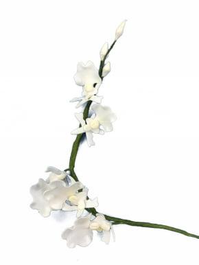 Orquídea Oncidium de biscuit