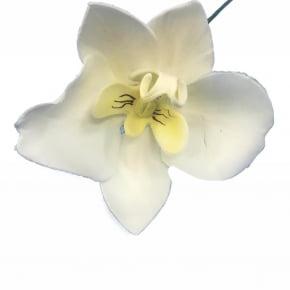 Orquídea Phalaenopsis de biscuit
