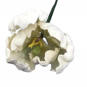 Tulipa Crespa de biscuit