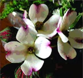 Molde de Silicone Frisador/Marcador de nervuras da flor Dogwood PEQUENA