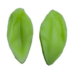 Molde de Silicone Frisador/Marcador de nervuras da flor Tulipa. Ideal para utilizar com Pasta Americana.