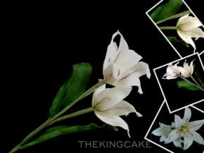 Molde de Silicone Frisador/Marcador de nervuras da Pétala da Flor Tulipa Crespa/Parriot